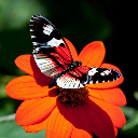 Butterfly Themes Wallpapers APK