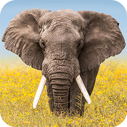 Wildlife Weather APK