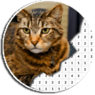 Cat Photography Coloring Book - Color By Number APK