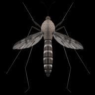 Mosquito Sound APK