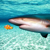 Real Shark Simulator APK