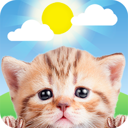 Weather Kitty APK