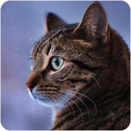 Talking Reality Cat APK