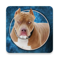 Pitbull Wallpapers APK